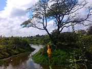 Adyar Poonga's waterbody as seen from Karpagam Bridge, MRC Nagar6
