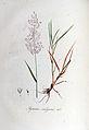 Agrostis vulgaris — Flora Batava — Volume v6.jpg