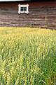 Aker pa den finska landsbyggden.jpg