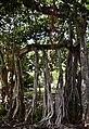 Alberi.giardino.inglese.jpg