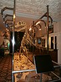 Allosaurus skeleton Devon.jpg