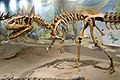 Allosaurus vernal 2.jpg