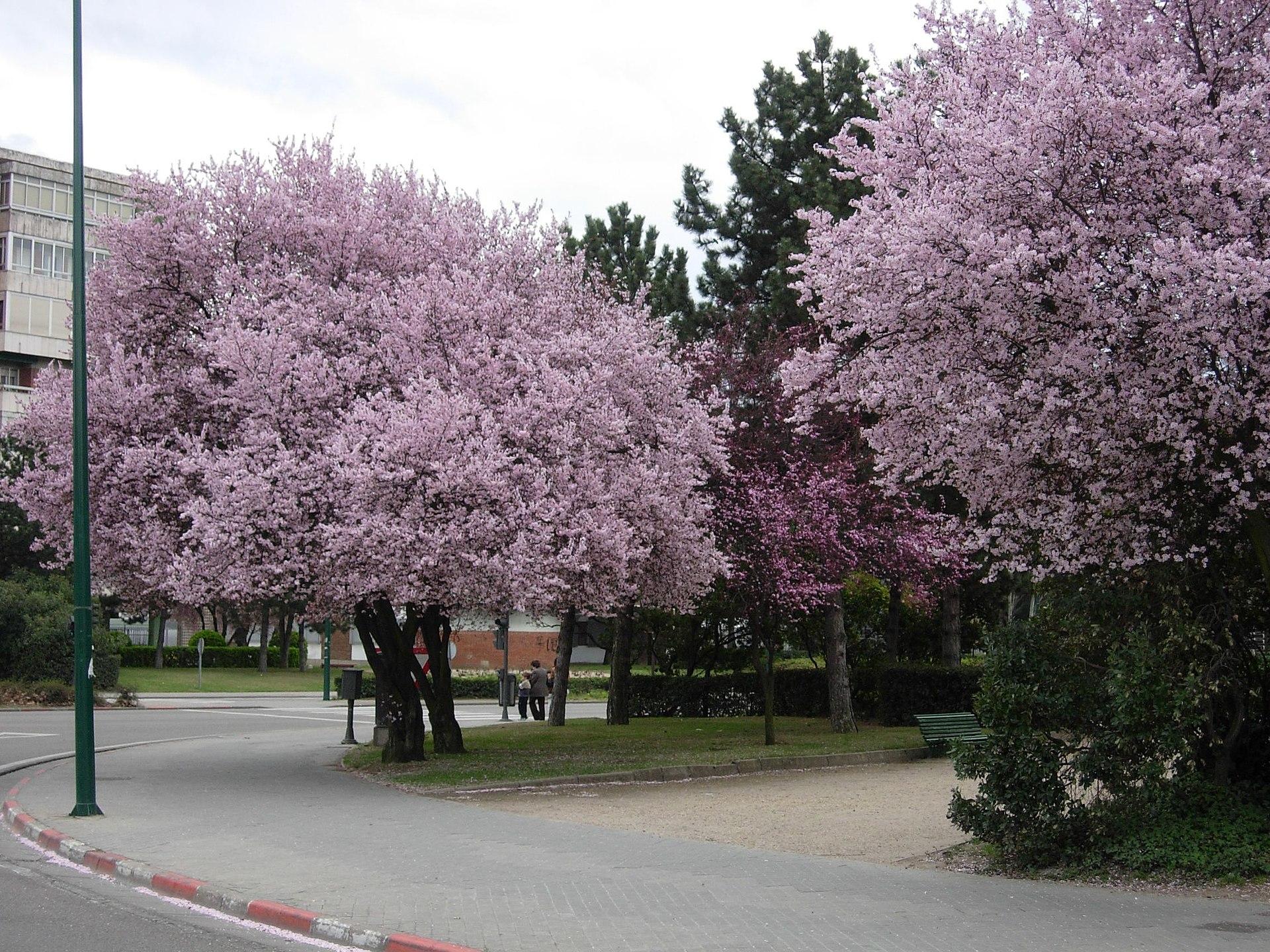 Rbol frutal wikipedia la enciclopedia libre for Arboles de poca raiz para jardin