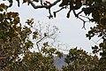 Alto Araguaia - State of Mato Grosso, Brazil - panoramio (1092).jpg