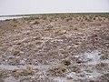 Alxa Zuoqi, Alxa, Inner Mongolia, China - panoramio (62).jpg