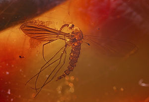 Amber - A mosquito in amber