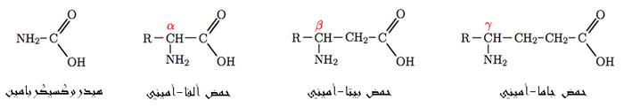 بحث حول الأحماض الأمينية. 700px-Aminacid-ar.PNG
