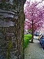 Amsterdam Noord 04 2014 - panoramio (14).jpg