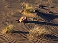 An evening at Crescent Dunes near Tonopah, Nevada - (26939747652).jpg