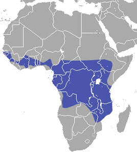 Angolan Rousette area.png