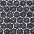 Anilox cells.png