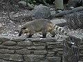 Animal (4857772970).jpg