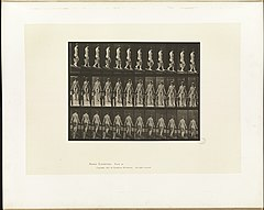 Animal locomotion. Plate 122 (Boston Public Library).jpg
