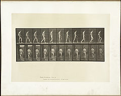 Animal locomotion. Plate 554 (Boston Public Library).jpg