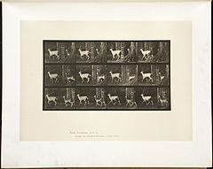 Animal locomotion. Plate 685 (Boston Public Library).jpg