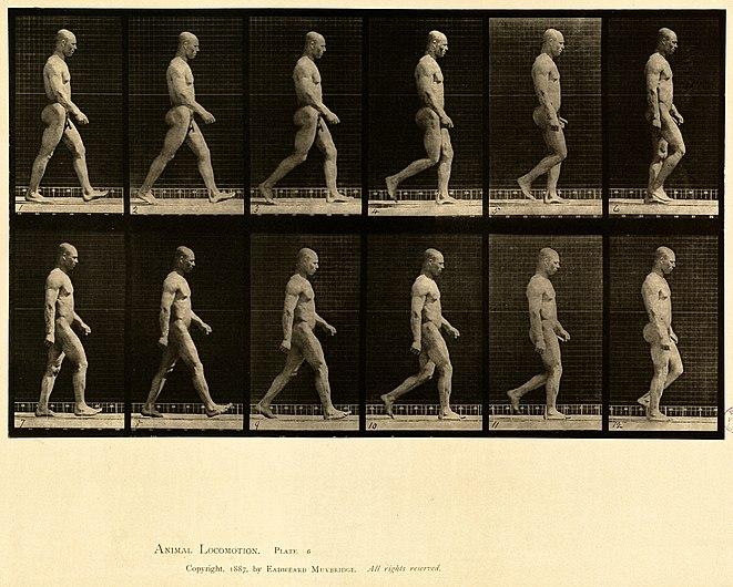 Animal locomotion. Plate 6 (Boston Public Library).jpg