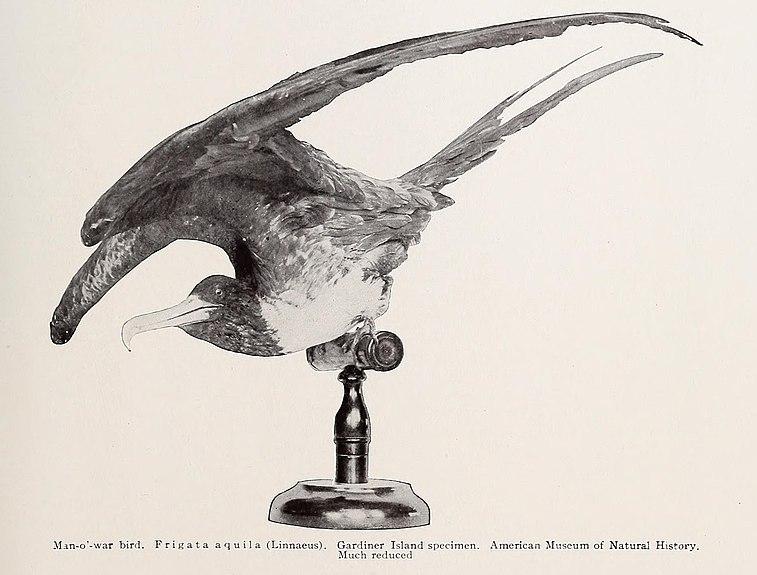 File:Annual report (1909) (14589836559).jpg