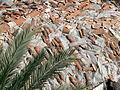 Antalya - Dachziegel.jpg