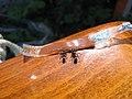 Ants1.jpg