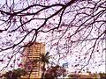 Araçatuba flores.jpg