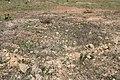 Araguainha - State of Mato Grosso, Brazil - panoramio (1114).jpg