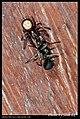 Araneae (5684065284).jpg