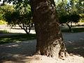 Aranjuez PM 090713 E.jpg