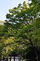 Arashiyama (8740641219).jpg