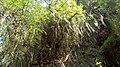Arboles frondosos - panoramio.jpg