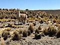 Arequipa, Peru - panoramio (3).jpg