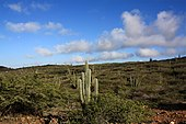 Arikok National Park, Aruba - panoramio (2) .jpg