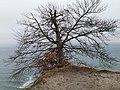 Arndt-Sicht mit beinahe abgestürztem Baum.jpg