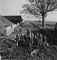 Arrest That Rat- the work of the Women's Land Army Rat Catchers, Sussex, 1942 D11220.jpg