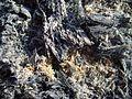 Ashes lava volcanic.jpg
