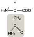 Asparagine w functional group highlighted.png