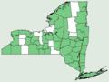 Asplenium platyneuron var platyneuron NY-dist-map.png