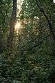 Auringonlasku metsässä.jpg