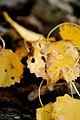 Autumn (1445504936).jpg