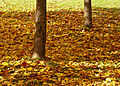 Autumn carpet - 2 (2931209455).jpg