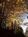 Autunno - autumn - jesień - otoño (11798116925).jpg