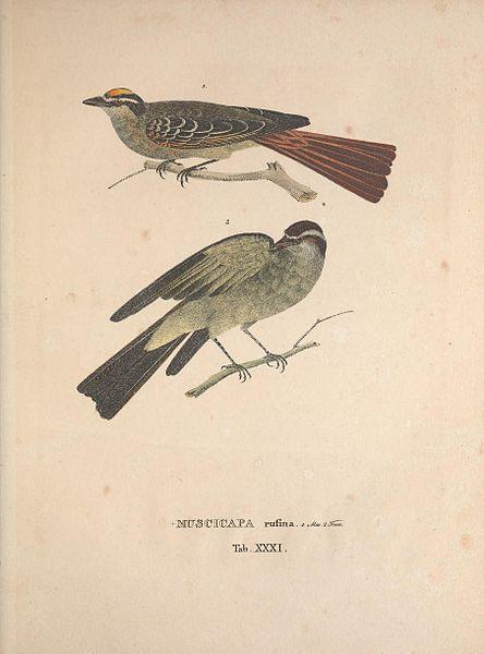 File:Avium Species Novae (8422831495).jpg