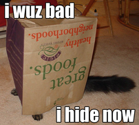 Example of lolcat