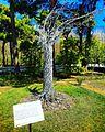 Baku Botanical Garden.jpg