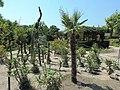 Balchik Botanical Garden 2017 60.jpg