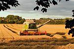 Baldock Harvest 2014 - Explored -) (14914164135).jpg