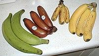 Photo of four varieties of bananas