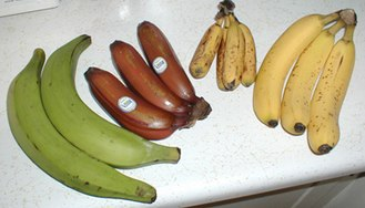 Cooking banana - From left to right: plantain, red banana, apple banana, and Cavendish banana