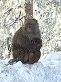 Bandar (Monkey) point.jpg