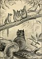 Bannertail; the story of a gray squirrel (1922) (14753436014).jpg