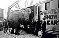 Barnum & Bailey elephant car with a well floor.jpg